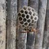 家に蜂の巣が出来てしまった!スズメバチ・アシナガバチの巣の駆除について。蜂に刺されたら?対策アリ。