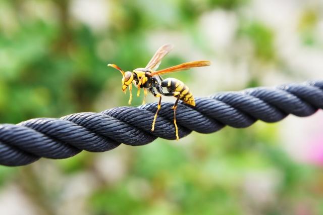 スズメバチ 巣 駆除,アシナガバチ 巣 駆除,家 蜂の巣,蜂に刺されたら?,蜂 種類,キイロスズメバチ,蜂 駆除,