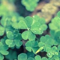 「運」とは何か?「運」の法則性と、開運方法について、学んできました。