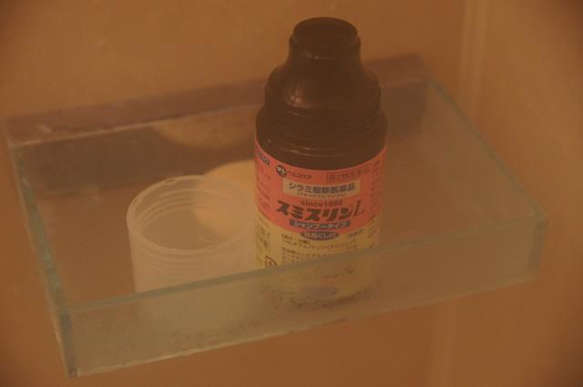 アタマジラミ お風呂,アタマジラミ 風呂,アタマジラミ 女の子,アタマジラミ 家族,アタマジラミ 感染力
